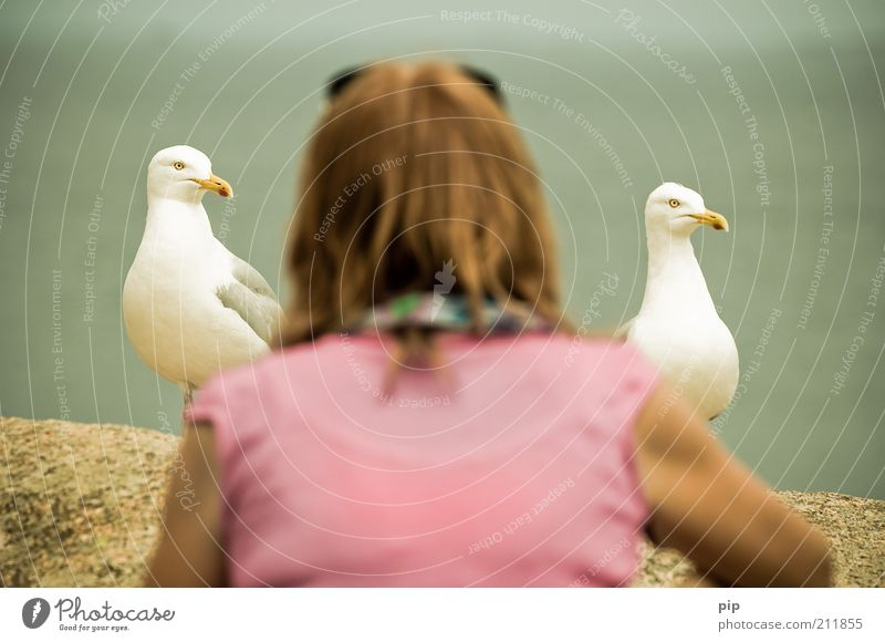 mine, mine Woman Adults Head Back 1 Human being Bird Seagull 2 Animal Observe Feeding Looking Brash Funny Near Curiosity Pink Optimism Together Patient Interest