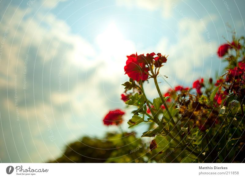 Sky Nature Plant Red Summer Environment Blossom Pink Esthetic Growth Decoration Soft Flower Blossoming Bud Orchid