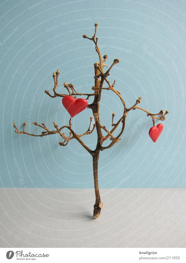 Tree Blue Plant Red Love Gray Brown Heart Environment Hope Decoration Branch Twig Bud Branchage