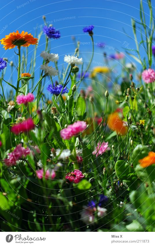 summer meadow Garden Nature Plant Spring Summer Beautiful weather Flower Grass Blossom Meadow Blossoming Fragrance Growth Happiness Multicoloured Moody