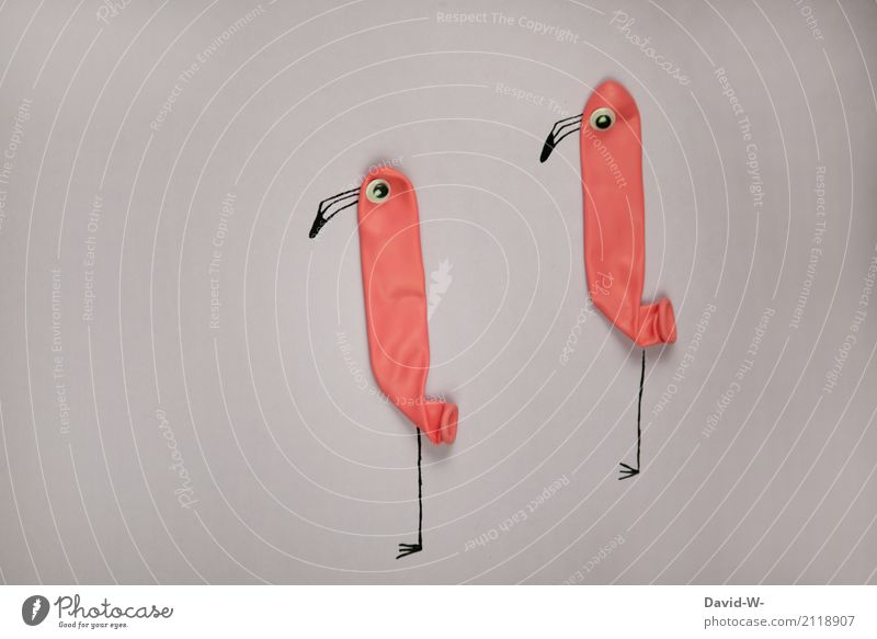 Nature Animal Environment Eyes Art Bird Pink Pair of animals Communicate Creativity Stand Uniqueness Observe Cute Curiosity Balloon