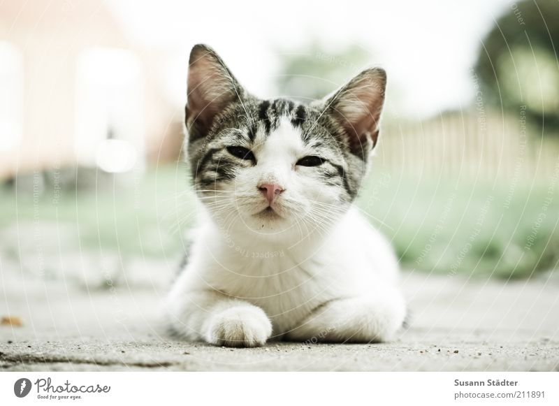Time for breakfast! Animal Pet Wild animal Cat Baby animal Observe Break Wake up Kitten Beautiful Cute Small Worm's-eye view Looking Exterior shot Close-up