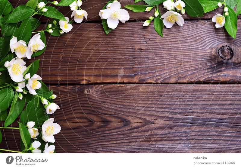 Branches of jasmine with white flowers Summer Feasts & Celebrations Flower Leaf Blossom Bouquet Wood Blossoming Fresh Bright Natural Brown Yellow Green White
