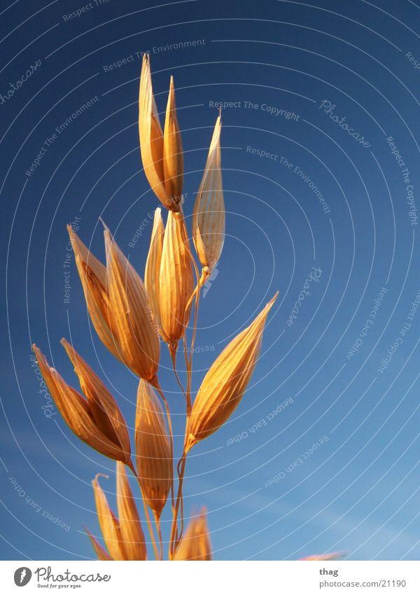 Sky Plant Winter Grain Seed Weathered Winter light