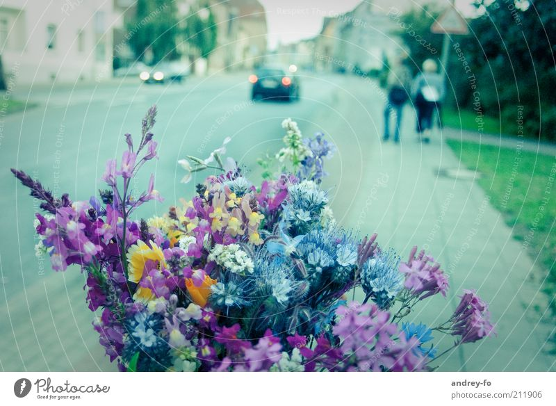 Nature Blue Green Plant Summer Flower Street Emotions Lanes & trails Spring Pink Blossoming Bouquet Fragrance Vehicle Pedestrian