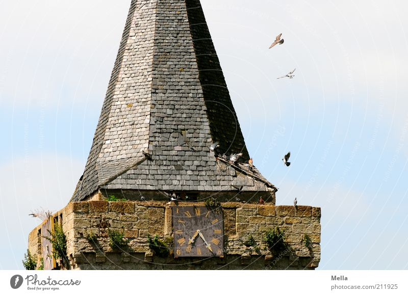 Sky Animal Freedom Stone Building Together Bird Fly Flying Time Free Facade Sit Church Group of animals Roof