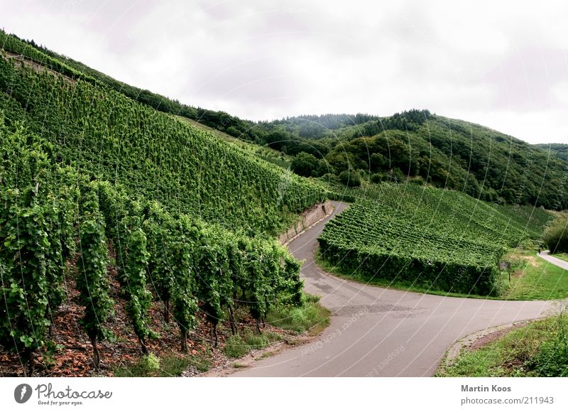 Wine roads Culture Landscape Summer Autumn Plant Hill Mountain Vineyard Agriculture Wine growing Junction Mosel (wine-growing area) Cycle path Colour photo