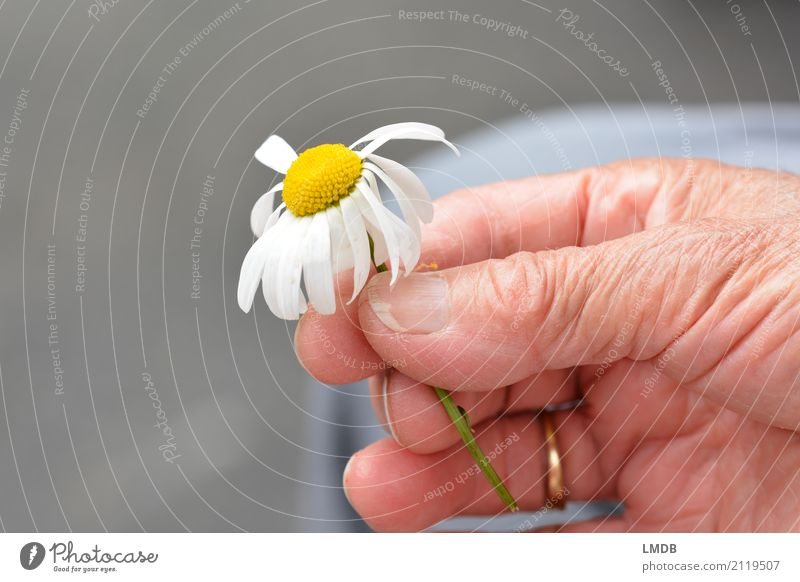 ...hold spring! Happy Healthy Care of the elderly Feminine Woman Adults Female senior Grandmother Senior citizen Life Hand 60 years and older Flower Old