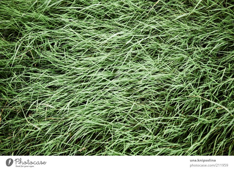 scruffy Nature Plant Grass Green Grass meadow Tuft of grass Blow Line Muddled Day Colour photo Subdued colour Exterior shot Abstract Pattern