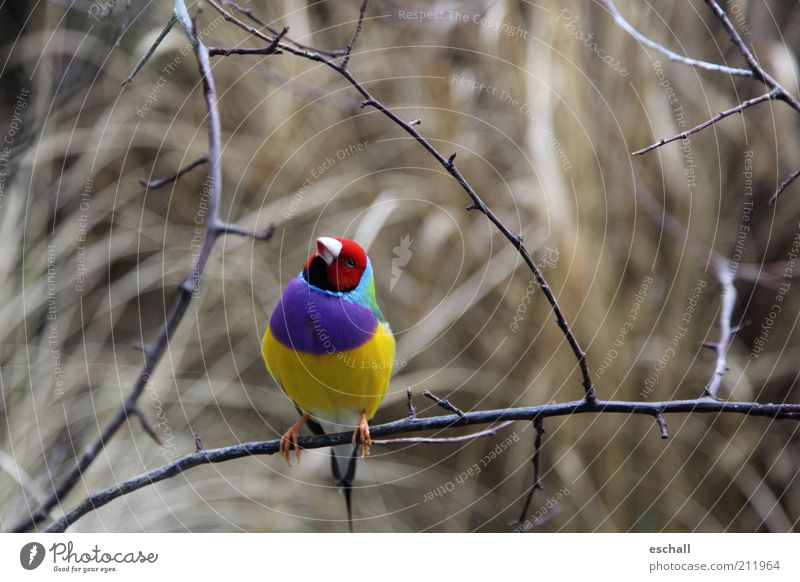Nature Beautiful Blue Red Calm Animal Yellow Colour Freedom Contentment Bird Small Elegant Sit Fresh Esthetic