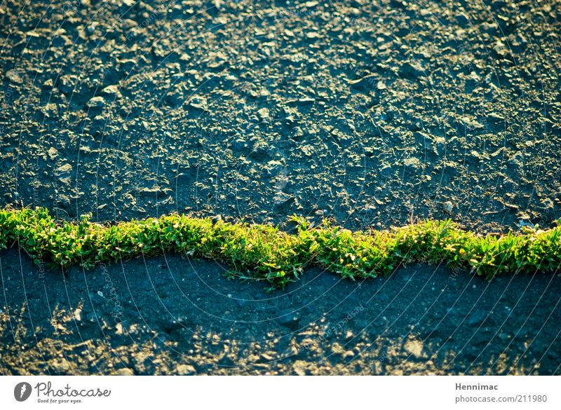 Nature Green Summer Street Grass Spring Gray Stone Lanes & trails Line Background picture Concrete Esthetic Growth Thin Exceptional