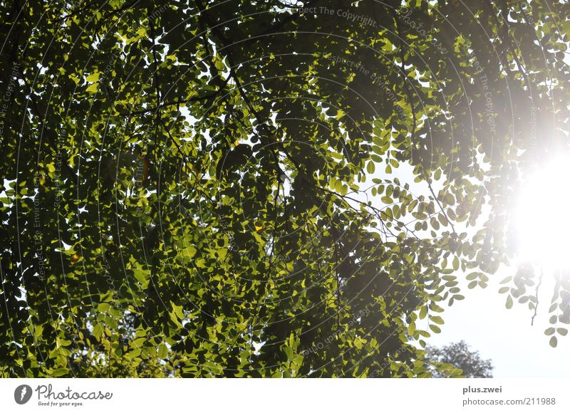 summer day Nature Plant Sky Sunlight Summer Beautiful weather Tree Leaf Happy Contentment Spring fever Calm Joy Environment Colour photo Exterior shot