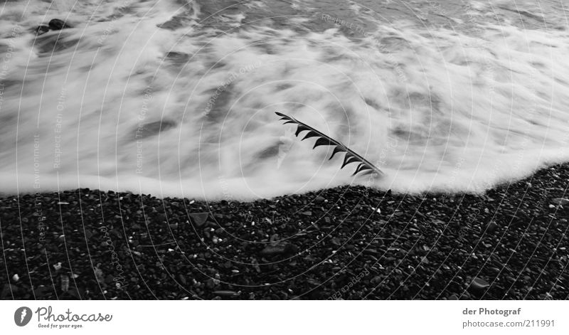 Nature Water Beach Loneliness Death Coast Waves Grief Feather Longing Pain White crest Black & white photo
