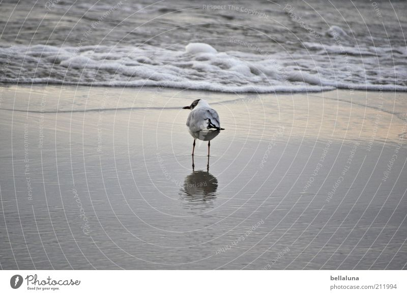 And I'm alone again, alone... Environment Nature Water Summer Weather Beautiful weather Waves Beach Baltic Sea Ocean Animal Wild animal Bird Wing 1 Stand