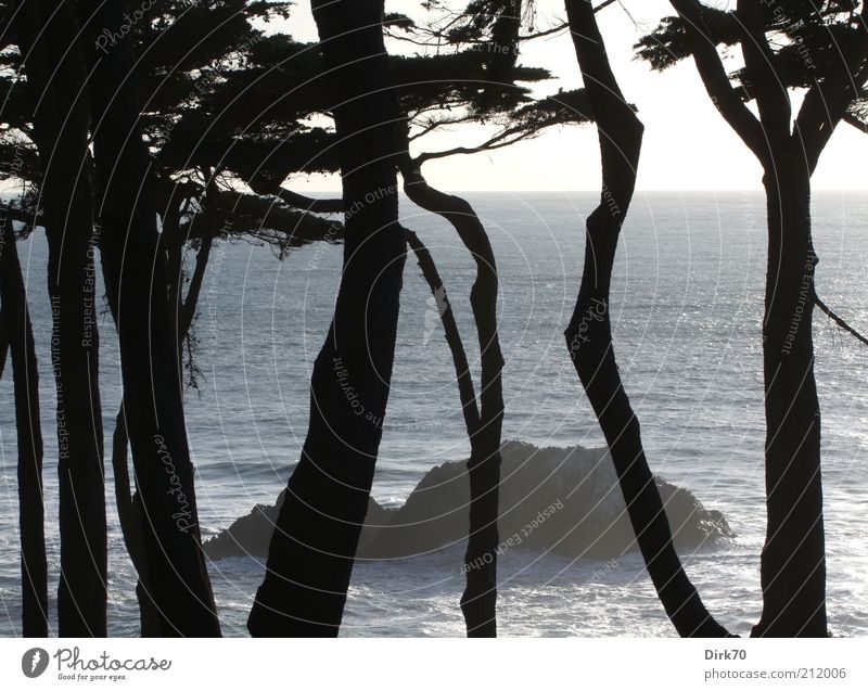 Water Beautiful Tree Ocean Summer Forest Cold Landscape Coast Waves Rock Island Threat Wild Americas Tree trunk