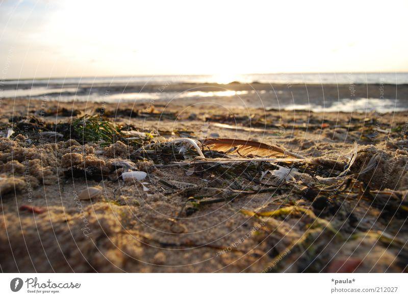 Nature Water Beautiful Sky White Sun Summer Beach Calm Dream Warmth Sand Landscape Contentment Brown Horizon