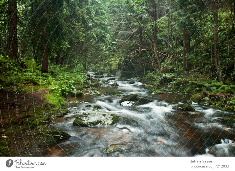 Course of the stream 2 Environment Nature Landscape Plant Elements Earth Water Forest Virgin forest Brook River Wet Long exposure Green Exterior shot Woodground