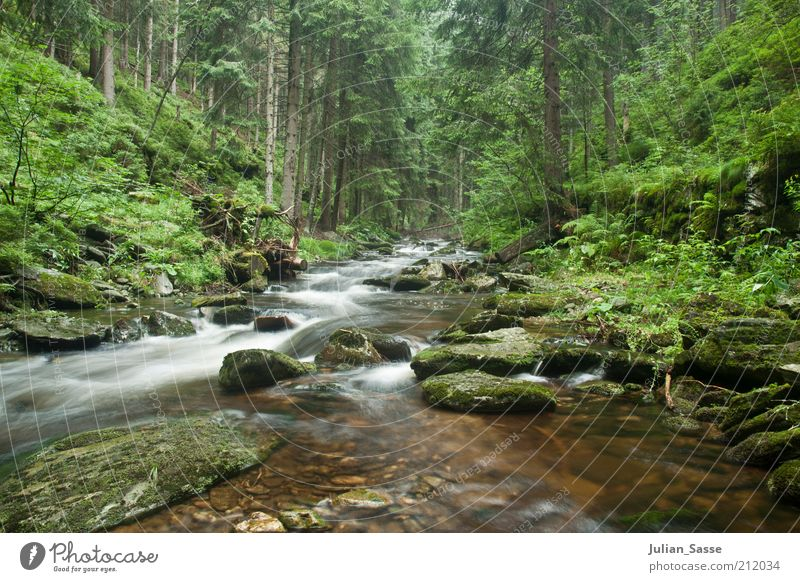 Course of the stream 3 Environment Nature Landscape Plant Elements Earth Water Forest Lake Brook River Wet Giant Mountains Long exposure Exterior shot Stone