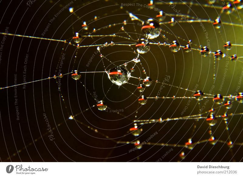 Nature Green Water Black Glittering Drops of water Wet Round Network Connection Sphere Dew Silver Delicate Point of light Spider's web