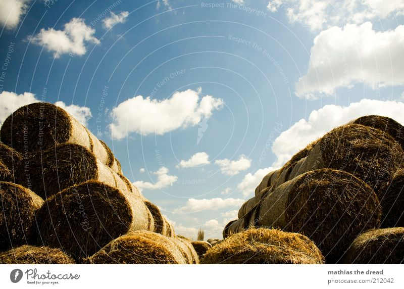 V Environment Nature Landscape Air Sky Clouds Summer Beautiful weather Plant Grass Agricultural crop Round Bale of straw Feed Heap Stack Pyramid Symmetry Calm
