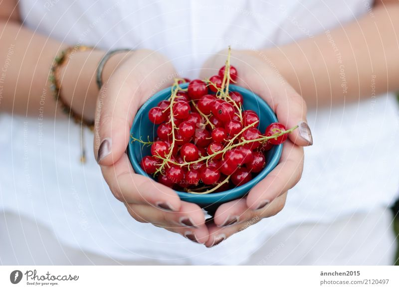 currants Redcurrant Berries Nature Summer Healthy Eating Dish Food photograph Harvest Pick amass Blue White Hand Bowl To hold on Woman Fingers