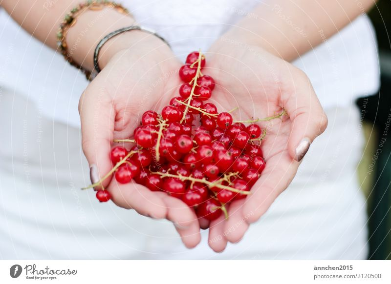 berry love Berries Redcurrant Hand To hold on White Stalk Summer Joy Healthy Eating Dish Food photograph Harvest Pick amass Process Fruit Nature Plant
