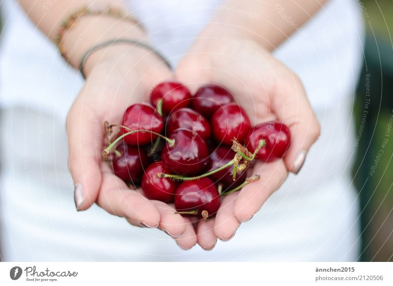 cherry love Nature Woman To hold on guard sb./sth. Healthy Eating Dish Food photograph Fruit Hand Fingers White Red Delicious Harvest Pick Stalk Green
