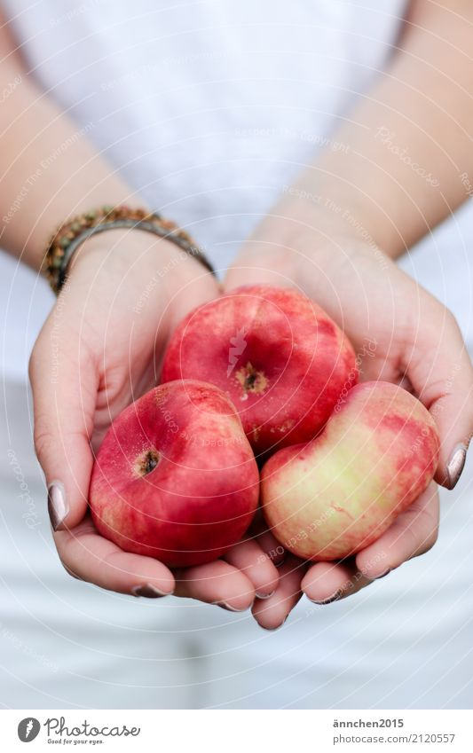 Peach II portrait format Hand To hold on Red Yellow Stone fruit flat peach Summer Joy Healthy Eating Dish Food photograph Harvest Pick amass Process Fruit