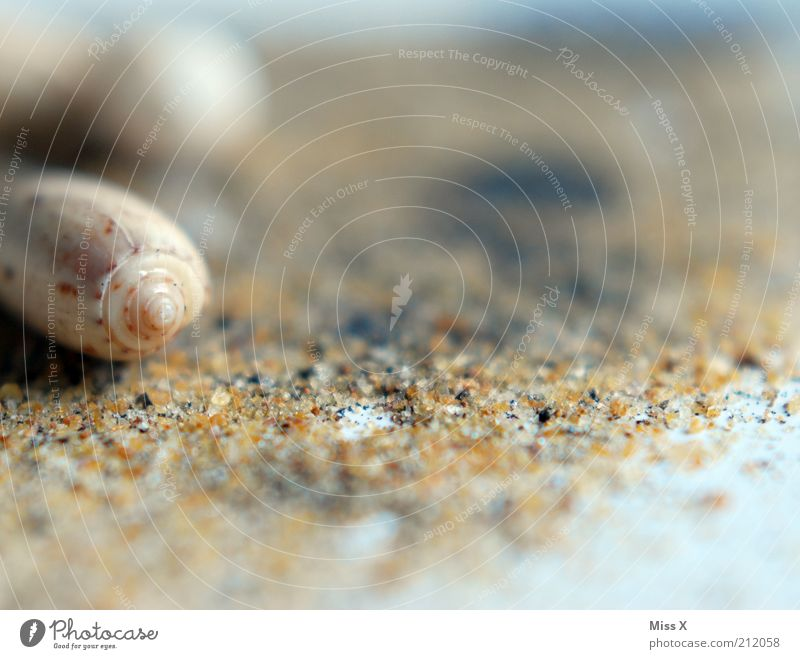 shell beach Vacation & Travel Summer Summer vacation Beach Coast Animal Snail Mussel Sand Sandy beach Mussel shell Shell sand Colour photo Subdued colour