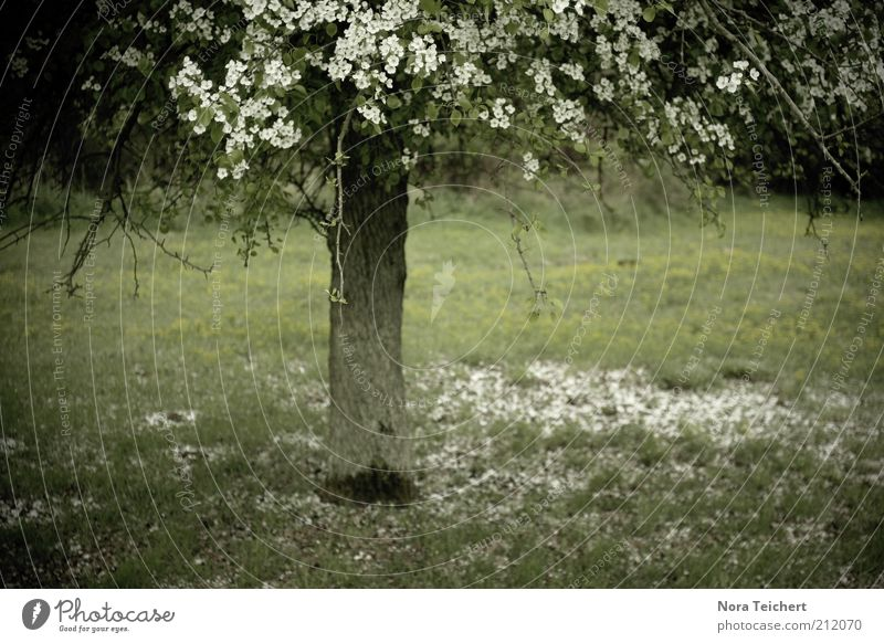 Nature Plant Beautiful Summer White Tree Landscape Environment Blossom Spring Meadow Grass Garden Moody Park Dream