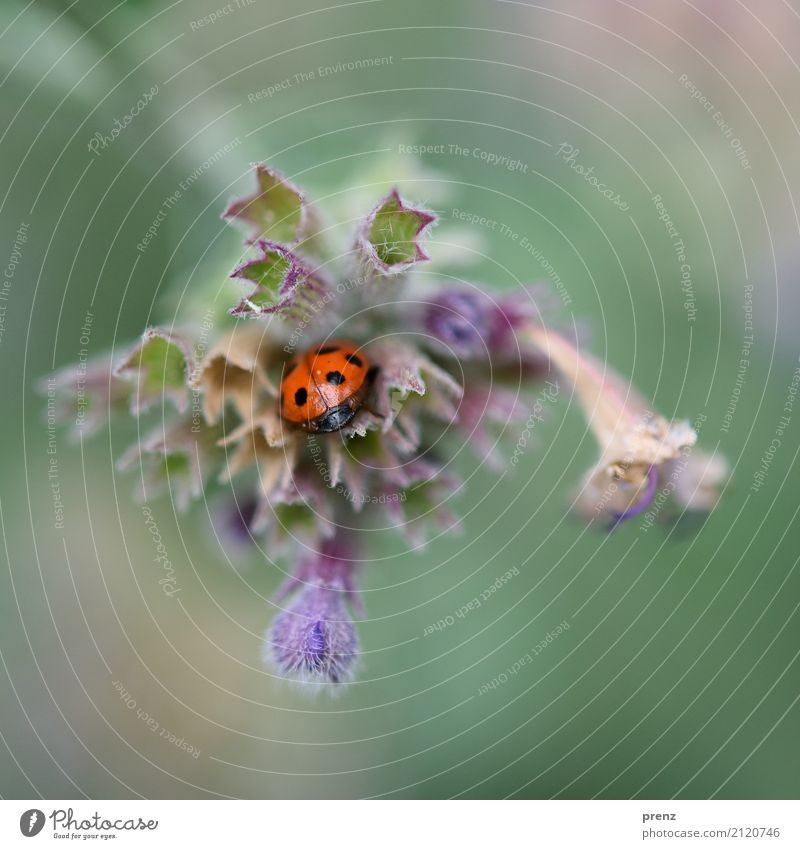 Nature Plant Blue Summer Flower Red Leaf Animal Environment Blossom Spring Park Wild animal Beautiful weather Hide Beetle