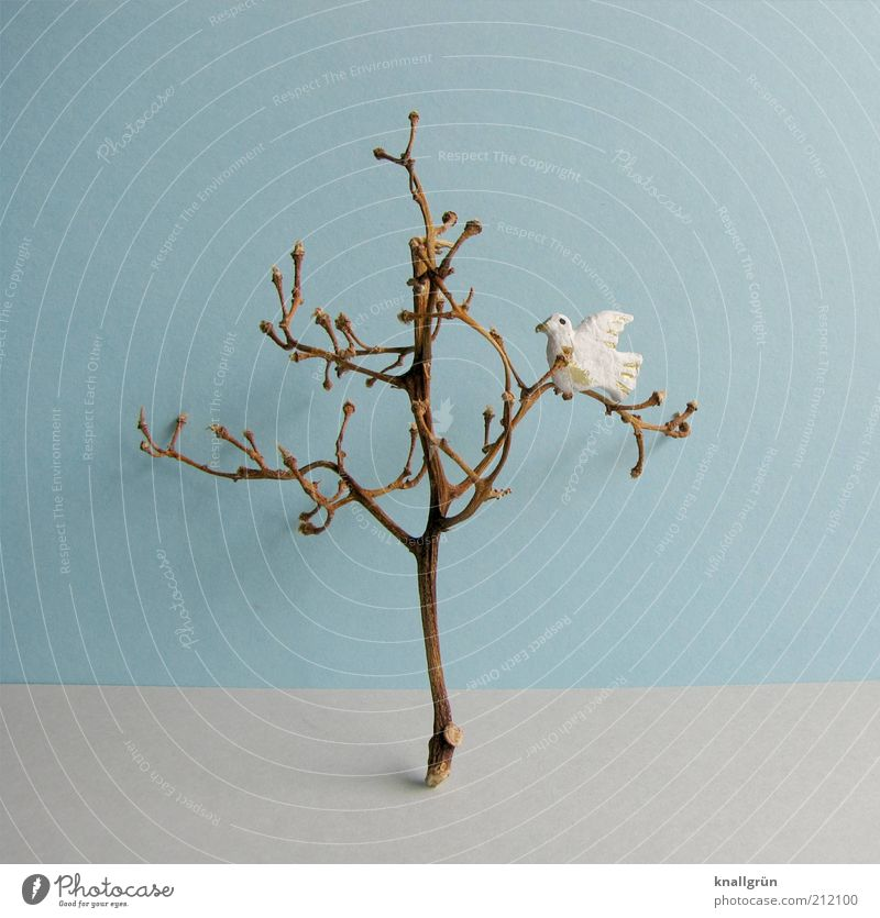 White Tree Blue Plant Animal Life Wall (building) Gray Brown Facade Hope Peace Pigeon Shriveled Branchage Twigs and branches