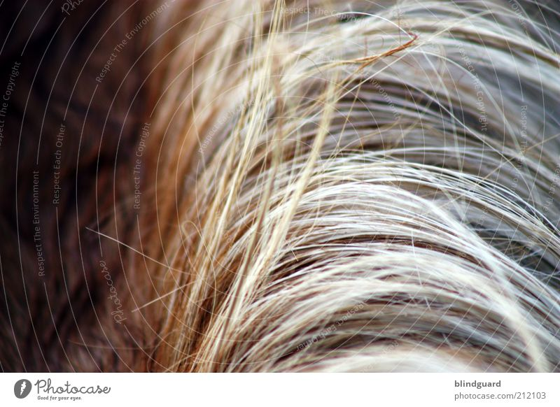 hair sharp Hair and hairstyles Brunette Blonde Long-haired Part Bangs Animal Farm animal Horse 1 Brown Gray White Mane Shadow Colour photo Detail Deserted Day