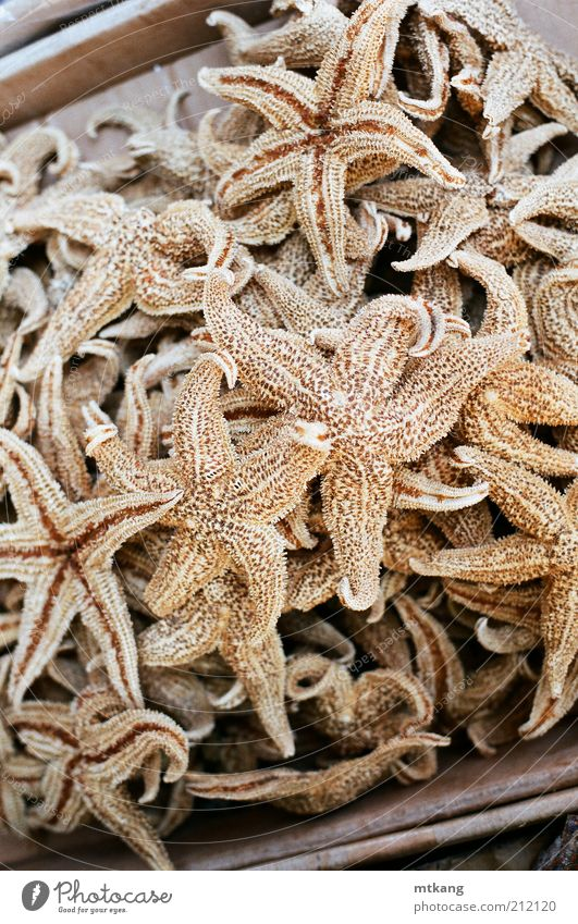 chinese medicine, dried starfish Food Seafood Asian Food Exotic Natural Brown antioxidant Edible Ingredients Organic Colour photo Close-up Detail Deserted Day