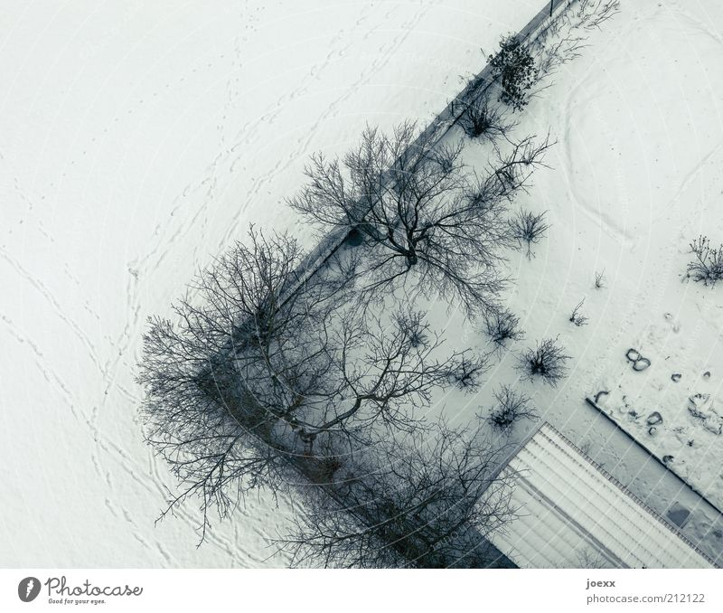 menace Winter Snow Tree Garden Roof Cold Under Boundary line Bird's-eye view Colour photo Subdued colour Exterior shot Aerial photograph Copy Space left