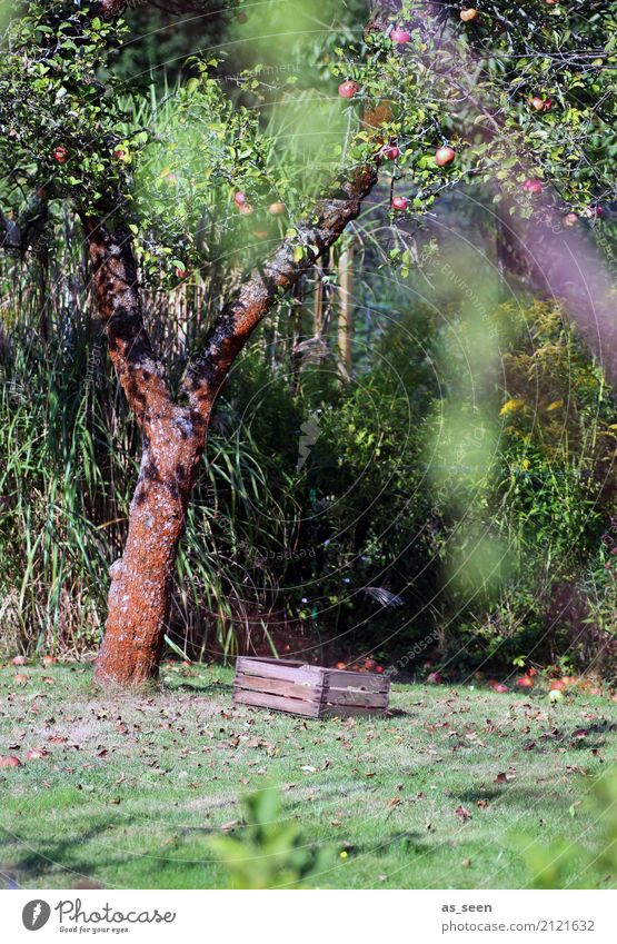 Nature Old Summer Green Tree Relaxation Calm Environment Autumn Natural Garden Brown Moody Fruit Contentment Retro