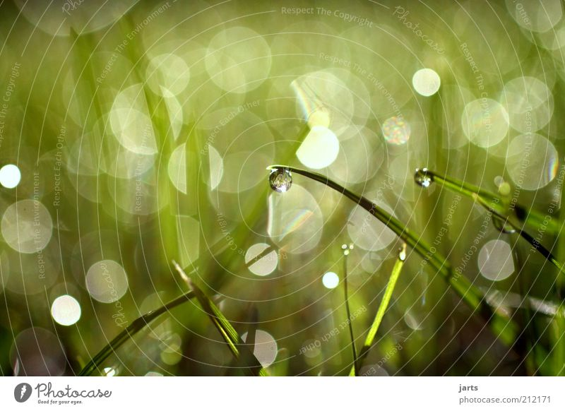 trifles Environment Plant Water Drops of water Spring Summer Climate Climate change Beautiful weather Grass Meadow Simple Fantastic Fresh Wet Natural Calm