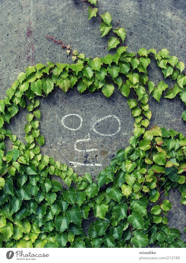 mr. summer Androgynous Art Painting and drawing (object) Environment Nature Summer Plant Ivy Foliage plant Tendril Concrete Smiley Growth Natural Gray Green