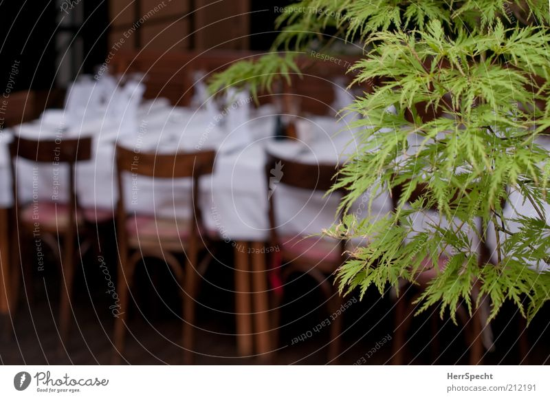Plant Green White Tree Leaf Style Feasts & Celebrations Brown Table Chair Event Restaurant Anticipation Food table Festive Twigs and branches