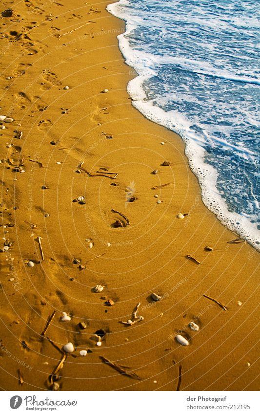 Water Ocean Summer Beach Vacation & Travel Sand Coast Wet Footprint Mussel
