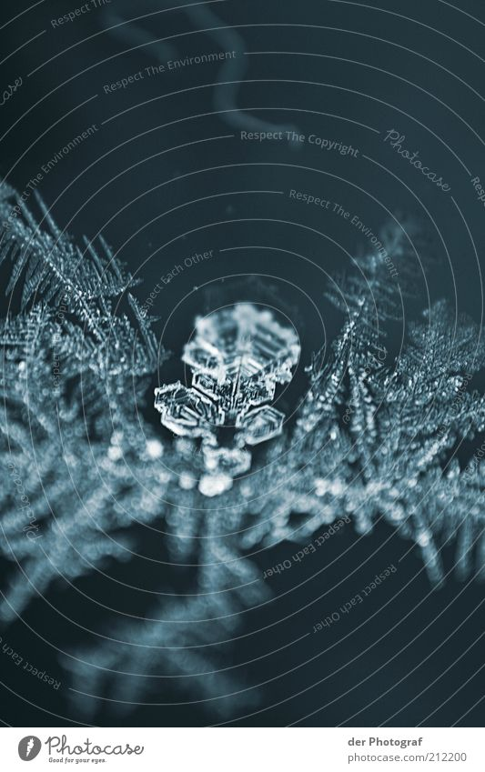 Nature Winter Cold Ice Environment Frost Frozen Climate change Ice crystal Frostwork Snowflake