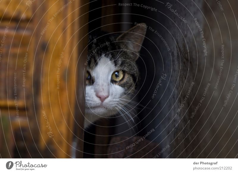 in hiding Animal Pet Cat Animal face Pelt 1 Safety Protection Watchfulness Curiosity Interest Discover Hide Hiding place Hidden Colour photo Exterior shot