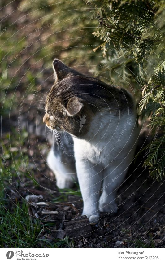 Cat Nature Animal Grass Think Dream Sit Meditative Observe Pelt Animal face Pet Paw Free-living Prowl
