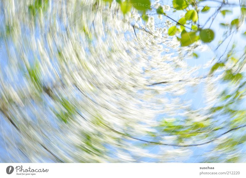 Nature Sky Tree Plant Leaf Blossom Spring Air Environment Branch Rotate Beautiful weather Abstract Rotation