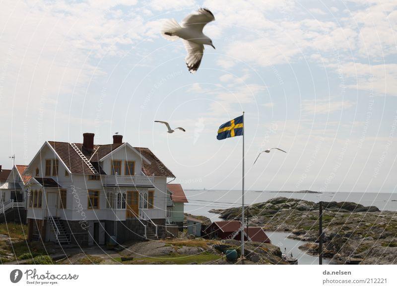 coastal bird Landscape Coast Sweden Fishing village House (Residential Structure) Dream house Wild animal Bird Seagull 3 Animal Movement Vacation & Travel