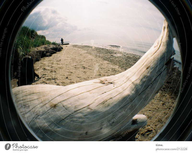 A place for my sweetheart Summer Beach Ocean Landscape Sand Water Tree Coast Wood Lie Death Log Wood grain To go for a walk Beige Transience Wide angle Horizon