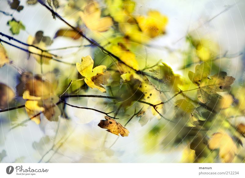 Nature Beautiful Leaf Autumn Growth Transience Change Environmental protection Autumn leaves Autumnal Autumnal colours Early fall Twigs and branches Automn wood