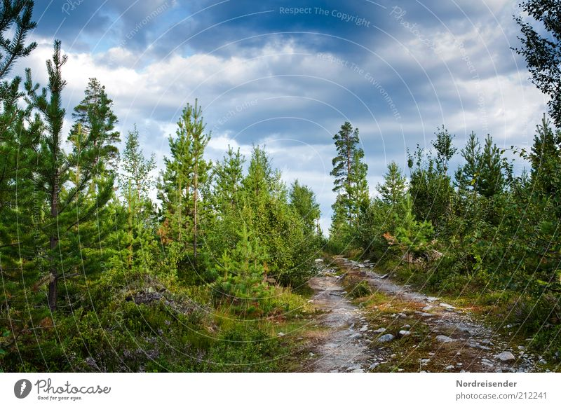 on the way Calm Trip Freedom Summer Nature Landscape Plant Forest Lanes & trails Multicoloured Loneliness Moody Footpath Scandinavia Sweden Colour photo
