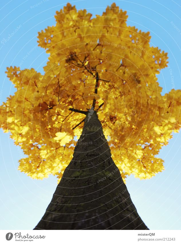 Nature Old Tree Leaf Yellow Colour Autumn Time Perspective Esthetic Seasons Upward Tree trunk Treetop Vertical Tree bark