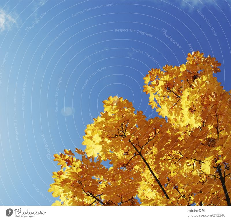 Nature Blue Beautiful Plant Leaf Environment Landscape Yellow Autumn Gold Beautiful weather Transience Branch Twig Autumn leaves Blue sky